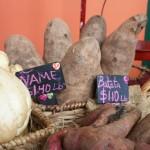 ñame root