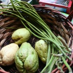 Moringa and Chayote